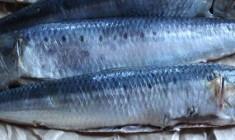 fougasse sardines
