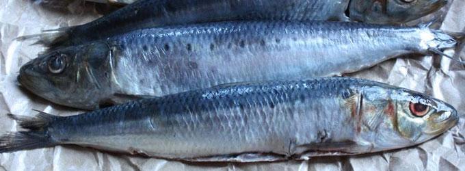 Fougasse aux sardines fraîches