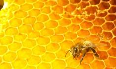 fougasse courgette chevre miel