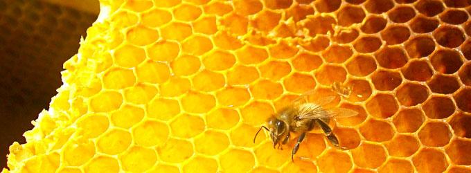 Fougasse aux courgettes, au chèvre et au miel