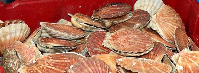 Fougasse noix de Saint Jacques, moules et gambas
