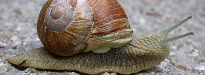 fougasse escargot