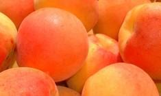 fougasse abricot